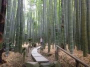 報告寺の竹庭園