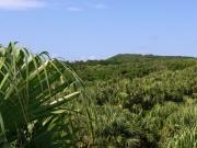 緑いっぱいの種子島。