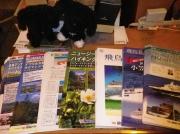 店内には海外ハイキングや飛鳥IIクルーズ等のパンフレットが置いてあります。